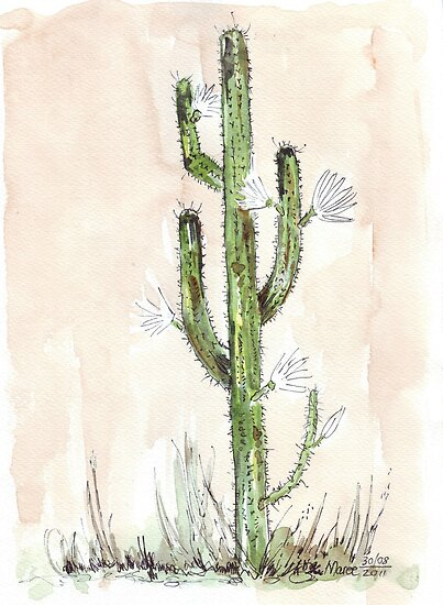 Cereus jamacaru by Maree Clarkson