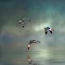 Avocet Dawn by Tarrby