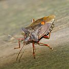 Forest Bug by dilouise