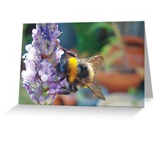 Bumble Bee on Purple Lavender Greeting Card