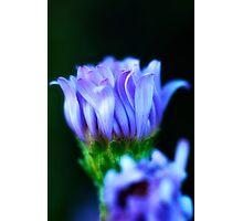 Blue wild flower Photographic Print