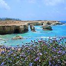 Coral Bay by JenThompson85