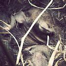 baby bunnies by Loretta Marvin