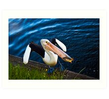 Pelican Waddle Art Print