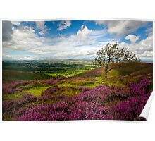 Stiperstones Heather, Shropshire, England Poster