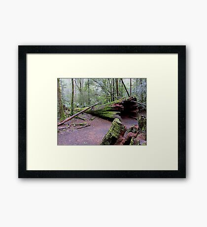 Fallen Hero Framed Print