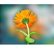 Flower 99 Photographic Print