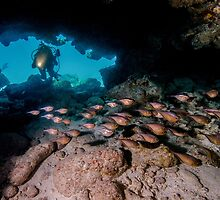 Diver in Cavern With School of Fish by Brent Barnes