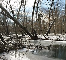 fading winter by KensLensDesigns