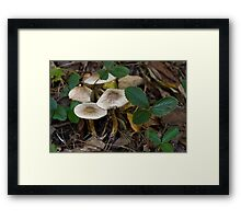 Fall in the Strawberry Patch Framed Print
