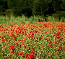 Poppy field by Beetroot06