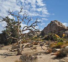 Dead Tree, Joshua Tree National Park by Bob Moore