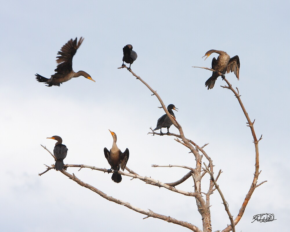 Cormorant Roost by Todd Weeks