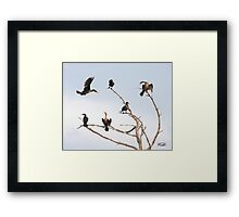 Cormorant Roost Framed Print
