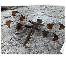 Whitetail Dragonfly Poster