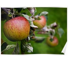 Apple Crop Poster