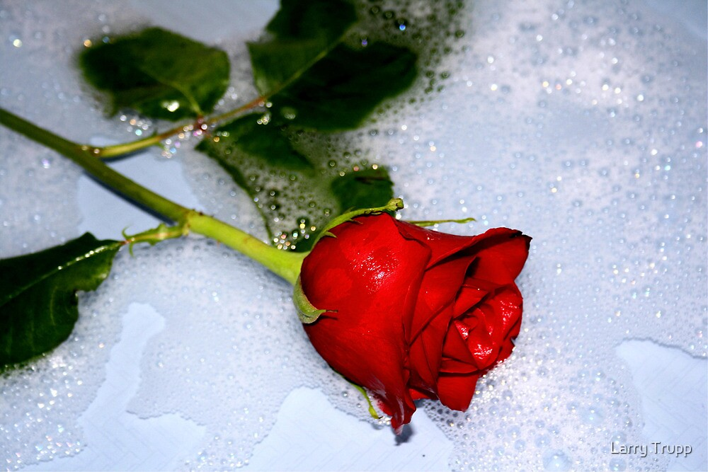 A Rose can say it Best by Larry Trupp