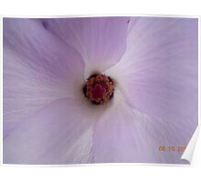 Inside a Delicate Flower Poster