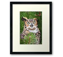 An animated Great Horned Owl Framed Print