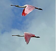 Synchronized flying in pink! Photographic Print