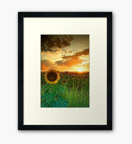 The Sunworshiper Framed Print