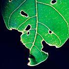 Leaf  by Melania
