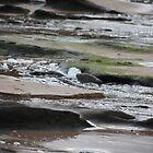 Mossy Rocks by Melanie  Barker