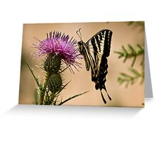 Swallowtail sipping from a thistle Greeting Card