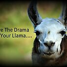 Save the Drama for your Llama by AngieBanta