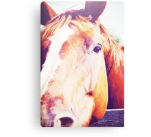 Horse Face Canvas Print