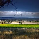 Canola View by Kym Howard