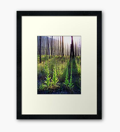 Resilience (Common Mullein) Framed Print