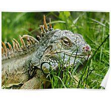 Iggy the Iguana Poster