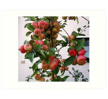 Apple Anyone? Art Print