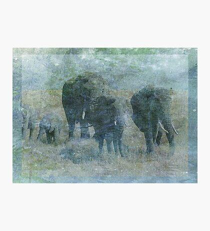 Chalk Elephants Photographic Print