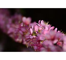 Heralds Of Spring Photographic Print
