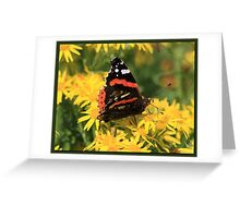 Red Admiral (2) Greeting Card