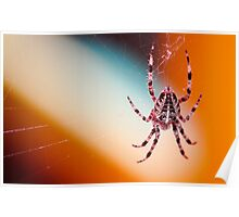 The spider's touch, how exquisitely fine! Feels at each thread, and lives along the line Poster