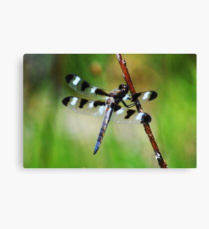 Twelve Spotted Skimmer Canvas Print