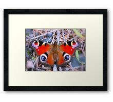 """""""Mrs Peacock takes a rest"""" Framed Print"""