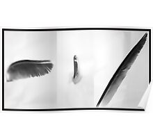 Feather - Tri picture  Poster