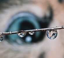 Eye Drops by AJM Photography