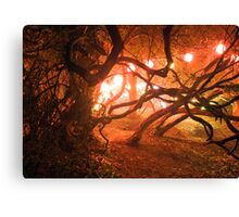 Bedgebury - Enchanted Forest Canvas Print