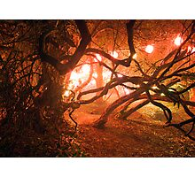 Bedgebury - Enchanted Forest Photographic Print