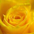 Yellow Dream by vbk70