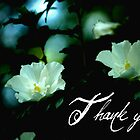 Thank you.... by Chelei