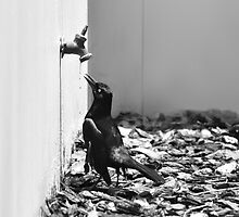 Bird Queue by Polly Greathouse