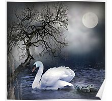 Swans by Moonlight Poster