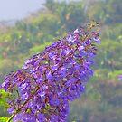 A tropical blossom in the jungle - Flor tropical en la selva by Bernhard Matejka