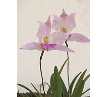 Queen of the flowers - orchids of the tropics Photographic Print